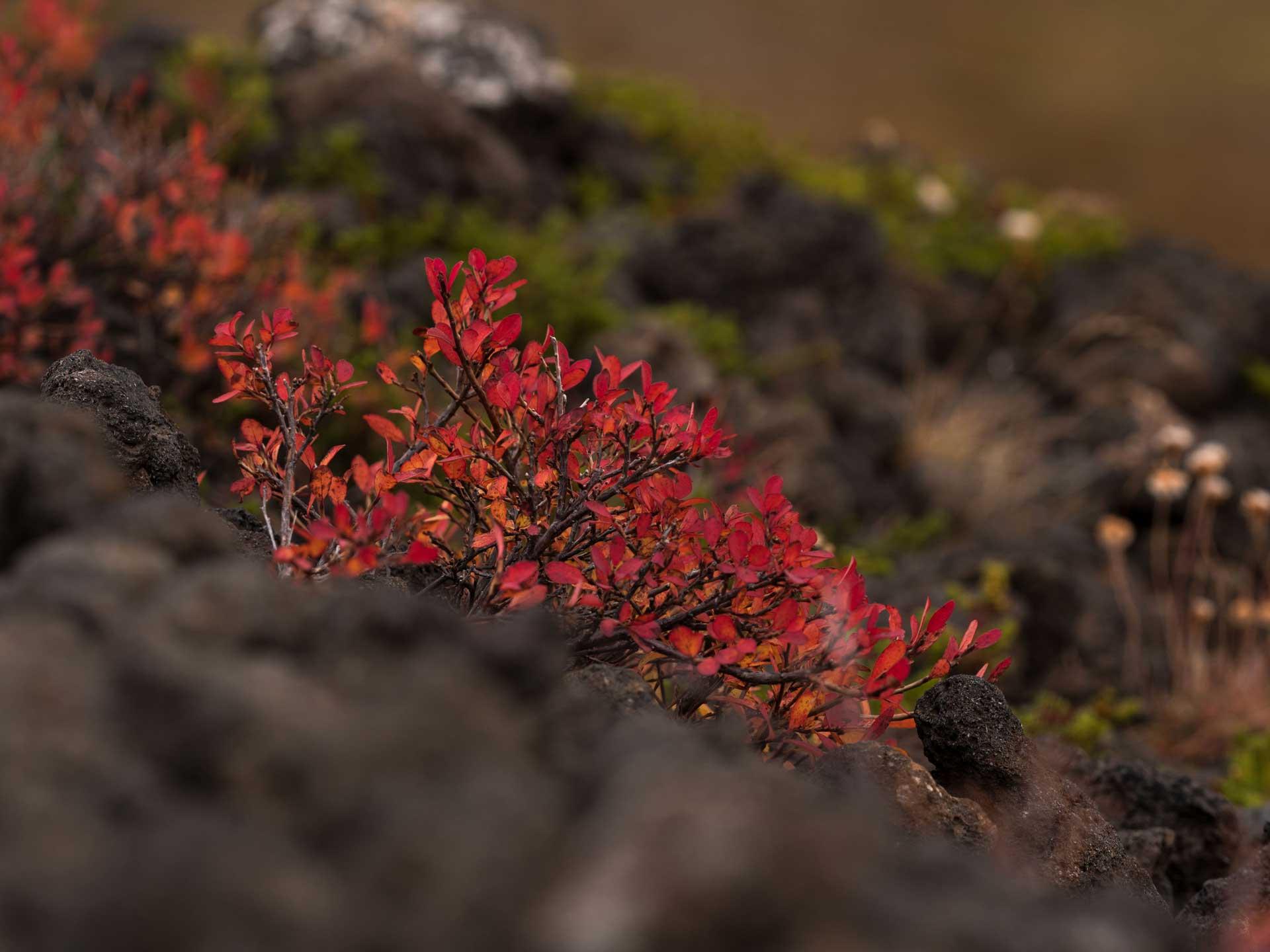 Une plante rouge